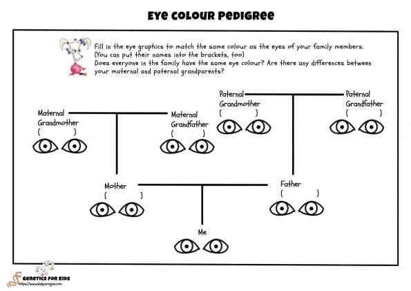 Eye_Pedigree